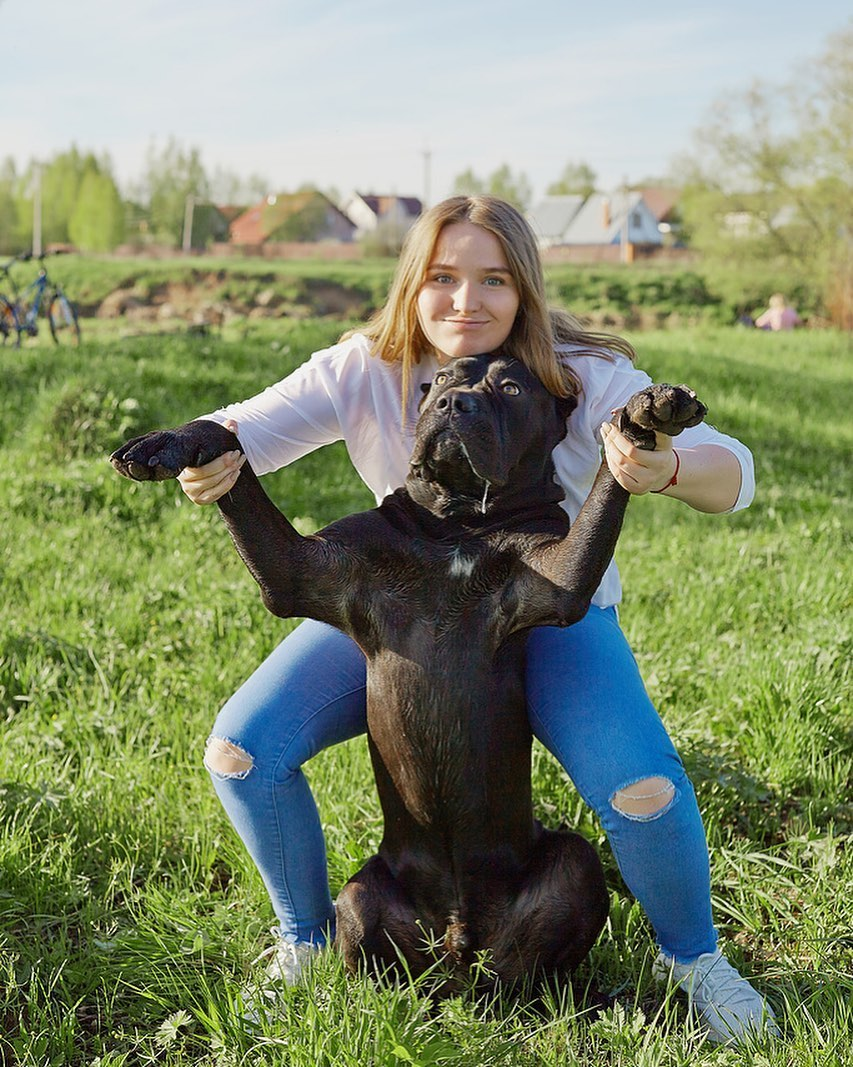 4 Tips for Finding the Best Dog Sitter for You and Your Pet 8