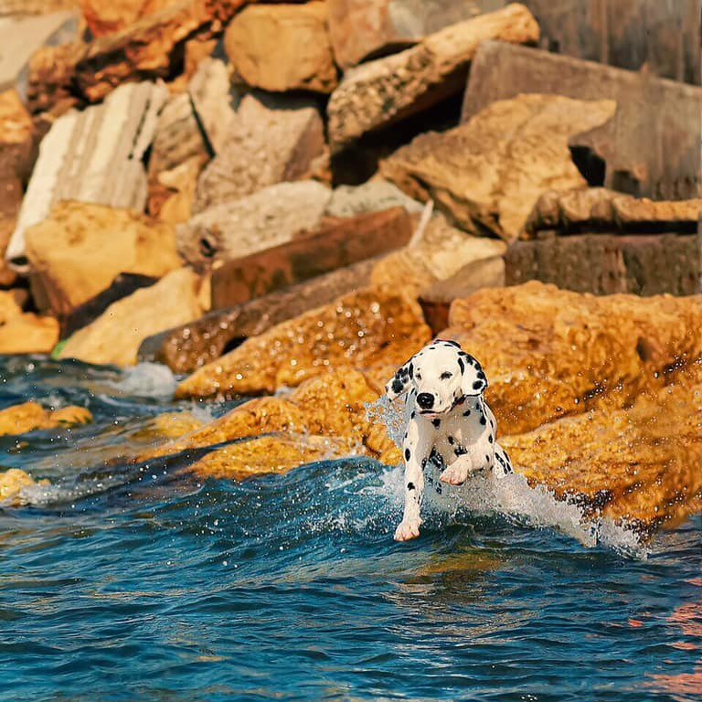 16 Dalmatian Pics That'll Keep You Smiling 7