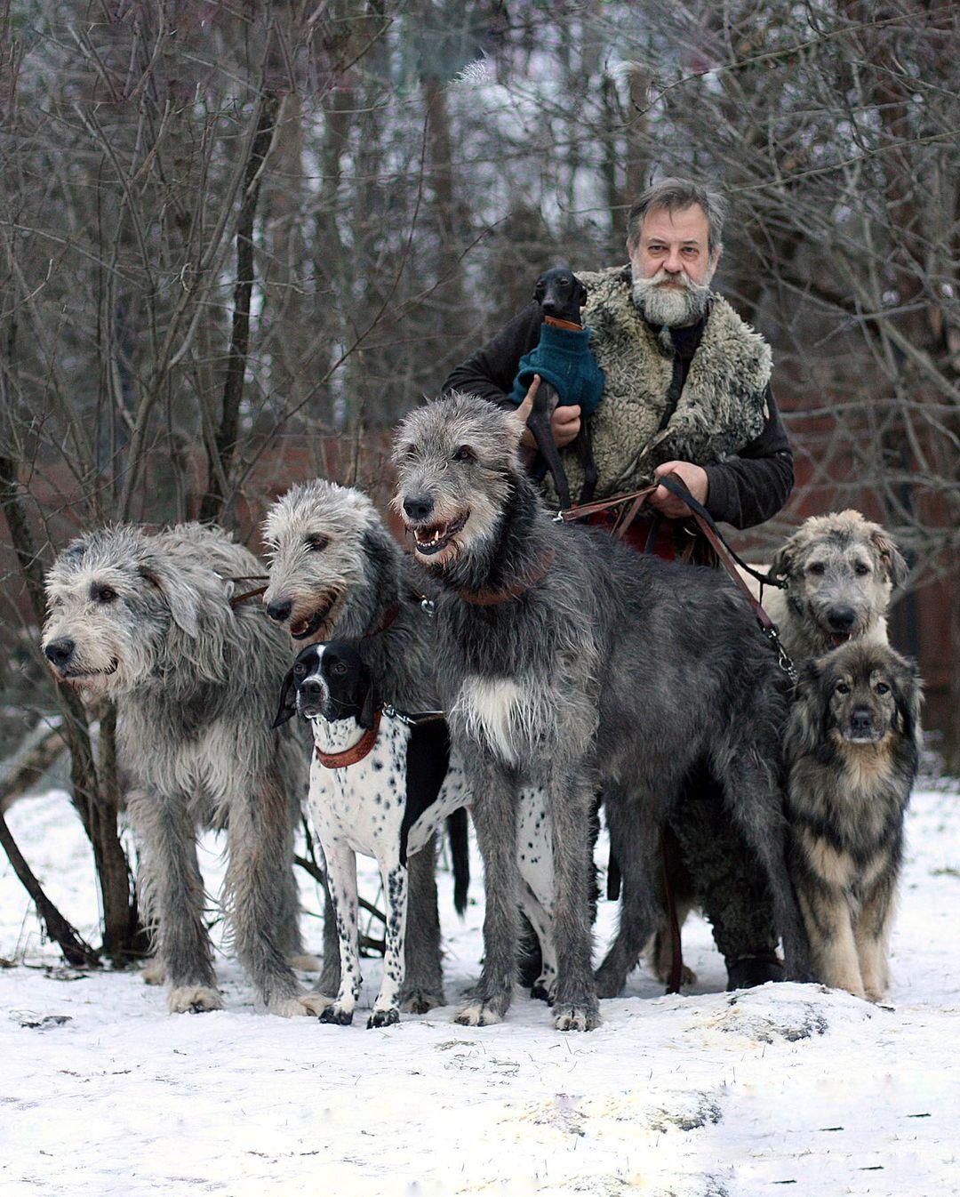 16 Irish Wolfhound Pics That'll Keep You Smiling 8