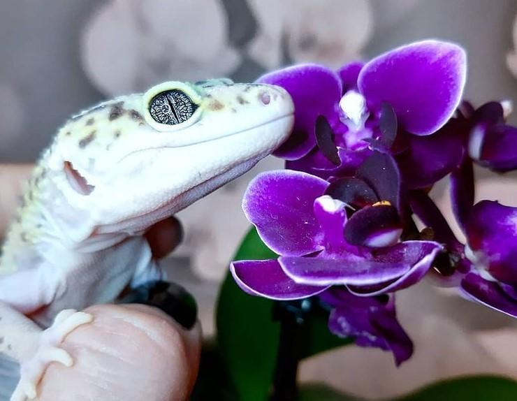 Leopard Gecko: Maintenance & Care 15