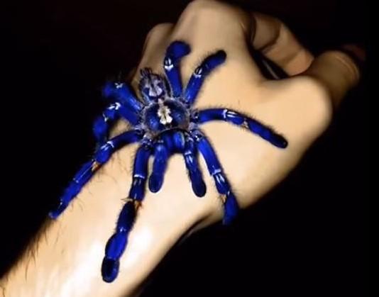 Tarantula: Species Profile 15
