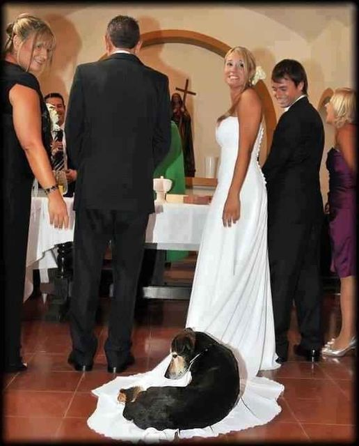 Taking Your Dog To Your Wedding