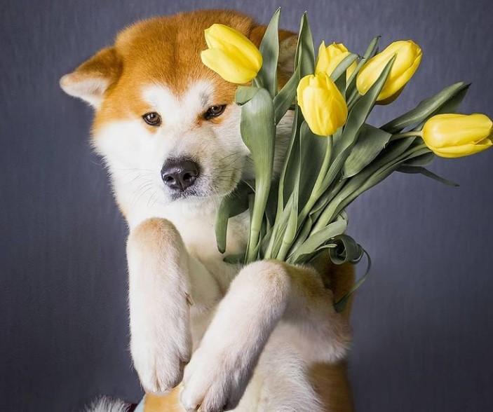 Ways To Treat Your Dog