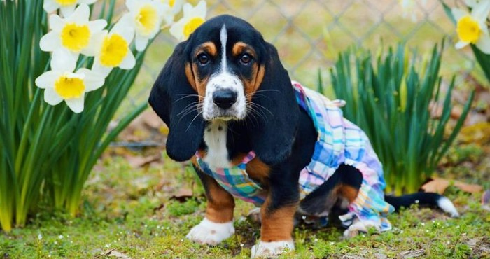 5 Ways To Prepare a Welcoming Home for Your New Puppy 12