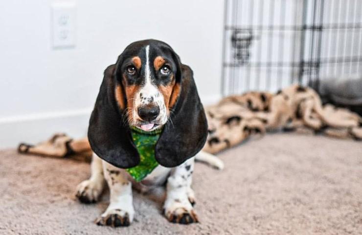 6 Ways To Keep Your Dog Comfortable Indoors 11