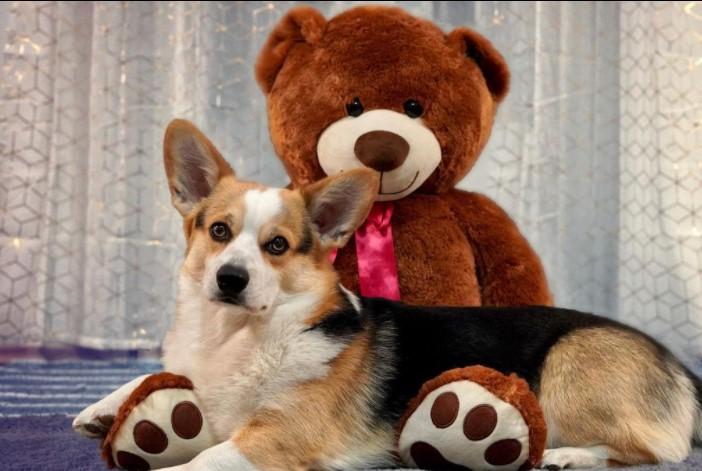 6 Ways To Keep Your Dog Comfortable Indoors 10