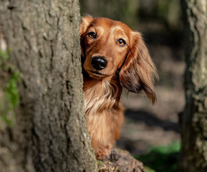 5 Steps how to do animal communication with a dog by yourself 12