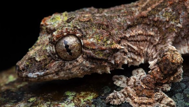 Flying Gecko: Maintenance & Care 30