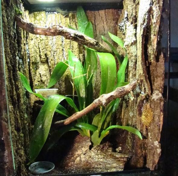 Flying Gecko: Maintenance & Care 18