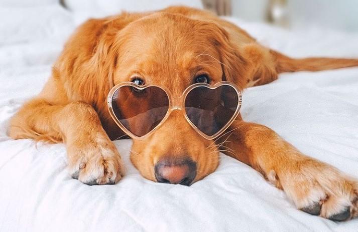 6 Ways To Keep Your Dog Comfortable Indoors 12