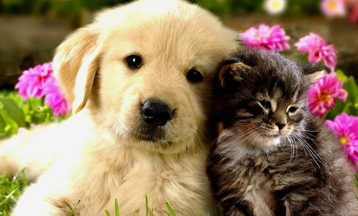 Pros and Cons of Keeping Pets: Tips for Parents 21