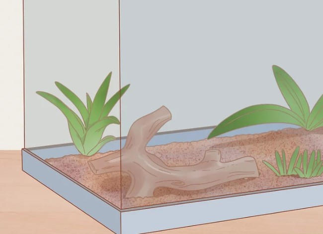 Mediterranean House Gecko: Maintenance & Care 10