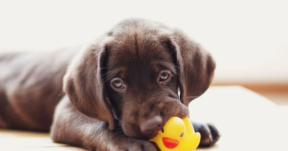 5 Ways To Prepare a Welcoming Home for Your New Puppy 9