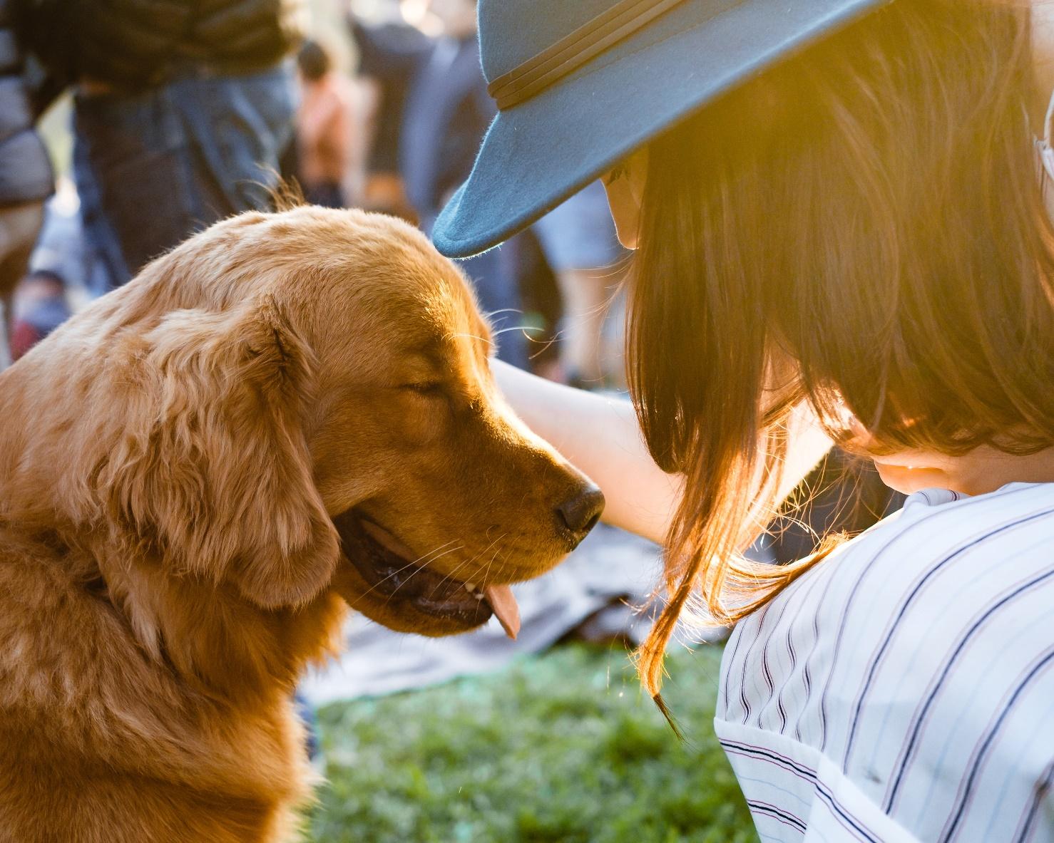 animal communication with a dog