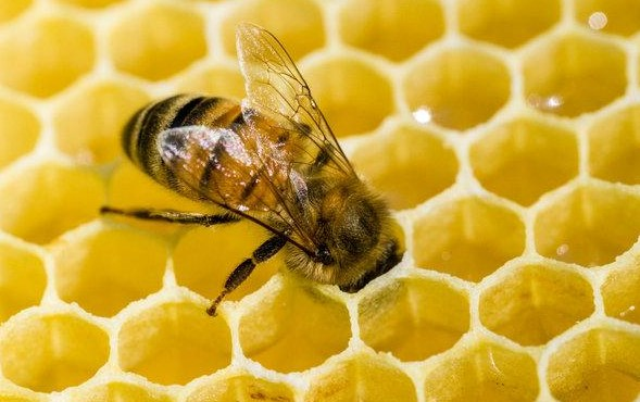 Bees: Legends and Myths 12