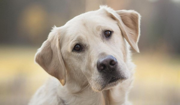 Is Your Dog Obese? How To Know And What To Do About It 5