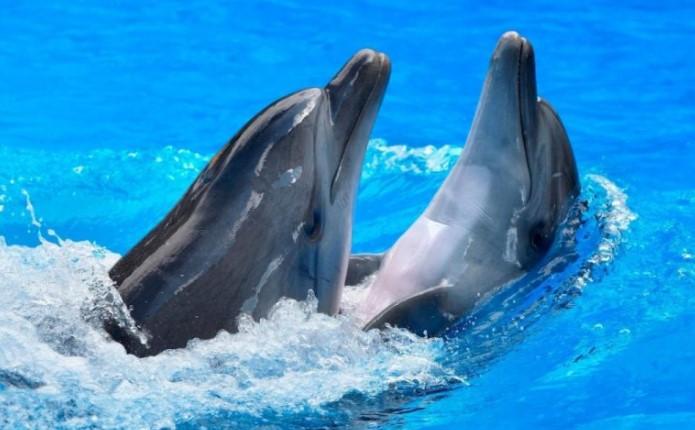 Dolphins in Mythology: Myths and Symbols 8