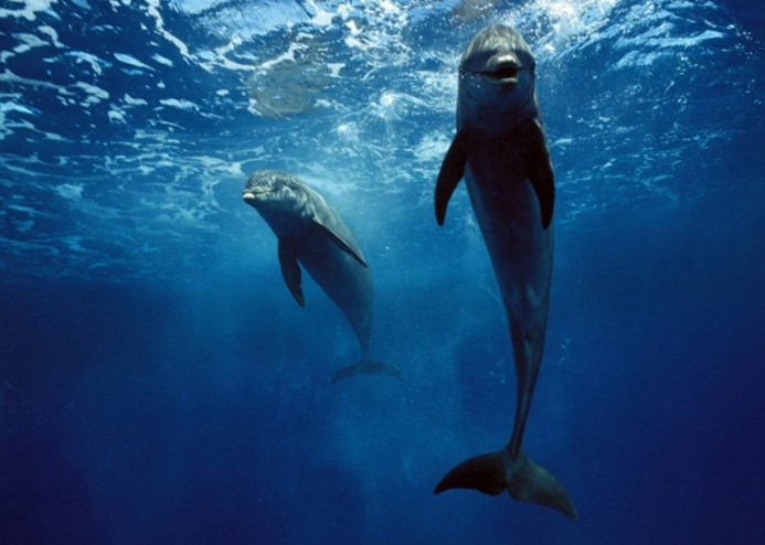 Dolphins in Mythology: Myths and Symbols 9