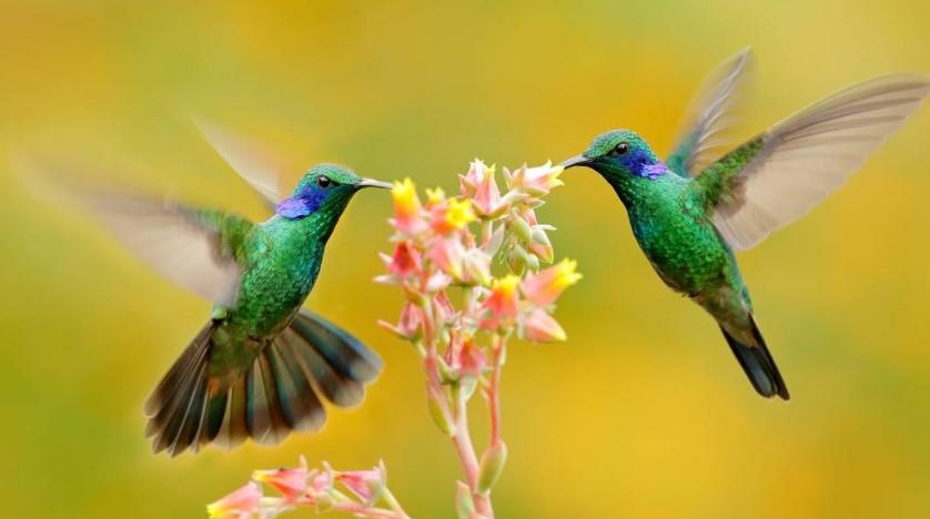 Hummingbirds in Mythology