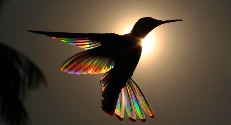 Hummingbirds in Mythology: Myths and Symbols 7