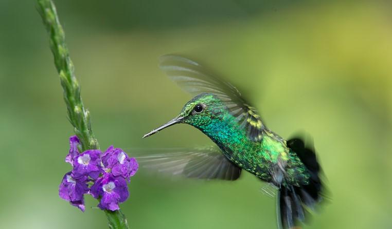 Hummingbirds in Mythology: Myths and Symbols 8
