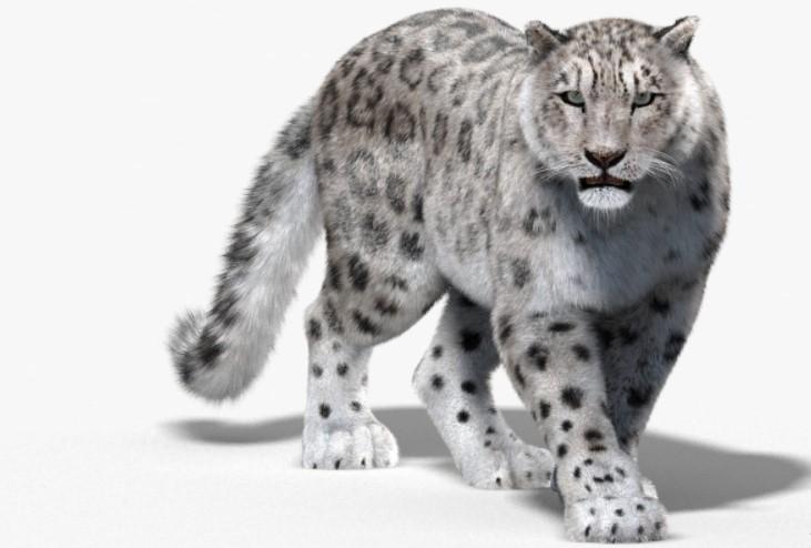 Snow Leopards: Legends & Myths 12