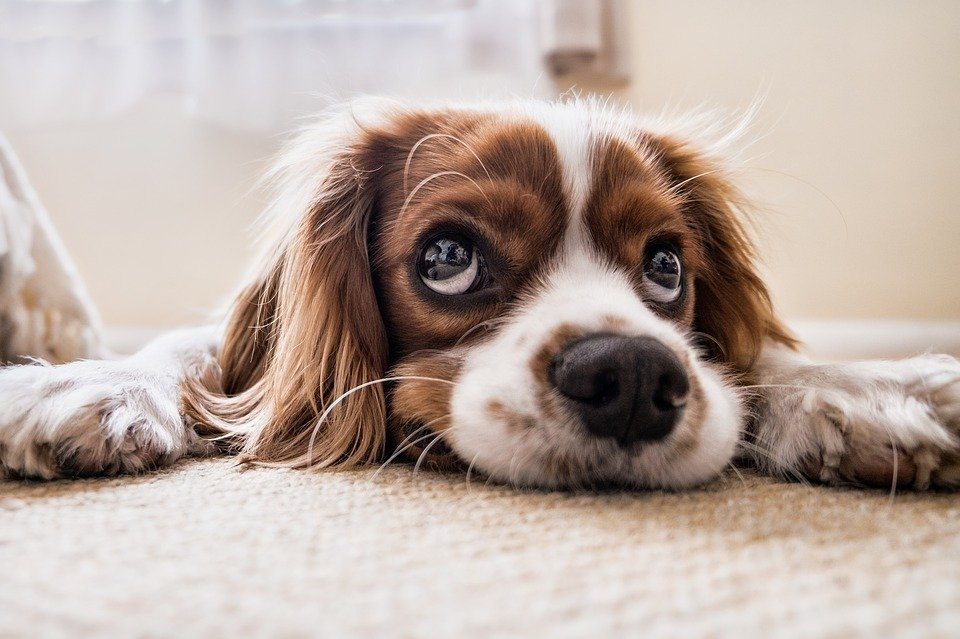 Signs Your Dog is Sad