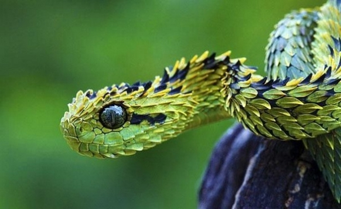 20 Unusual Animals to See Before You Die 62