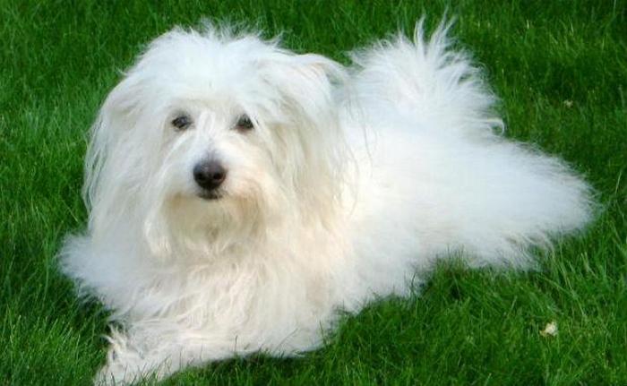 11 Dog Breeds That No Longer Exist 32