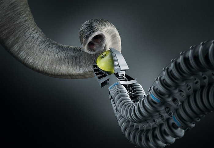 Amazing Gadgets: Prosthetic Paws and Tails for Animals 30