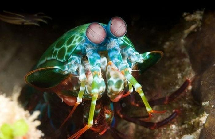 20 Unusual Animals to See Before You Die 55