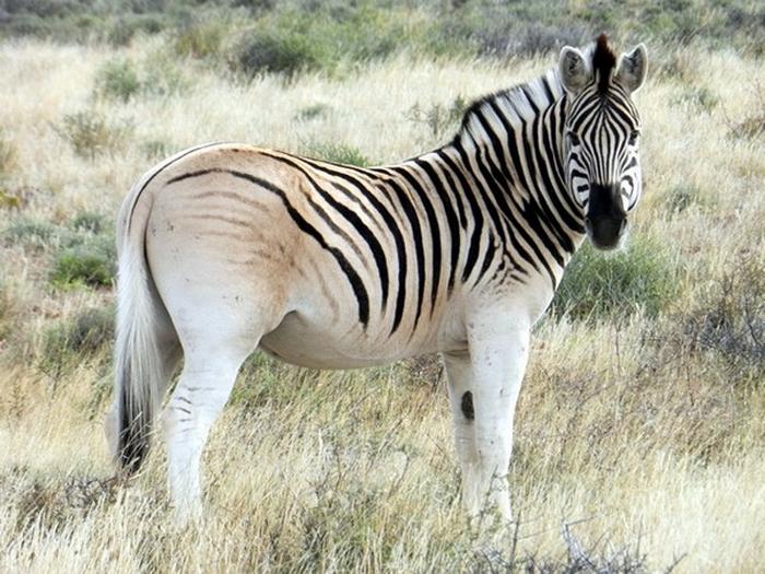 Resurrected Species of Animals and Plants 11