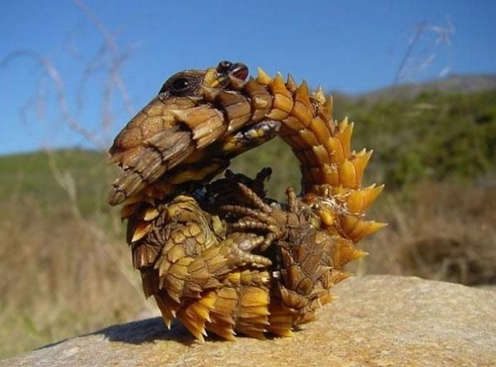 20 Unusual Animals to See Before You Die 68