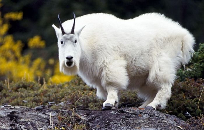 20 Unusual Animals to See Before You Die 47