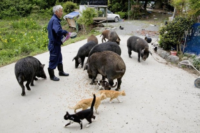 Naoto Matsumura: the Loneliest and Most Radioactive Japanese Farmer 13