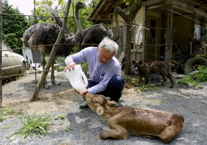 Naoto Matsumura: the Loneliest and Most Radioactive Japanese Farmer 14