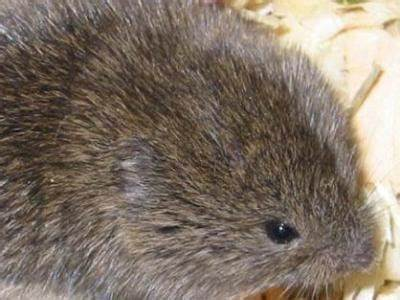 Pet Safe Ways To Deal With Voles & Other Garden Pests