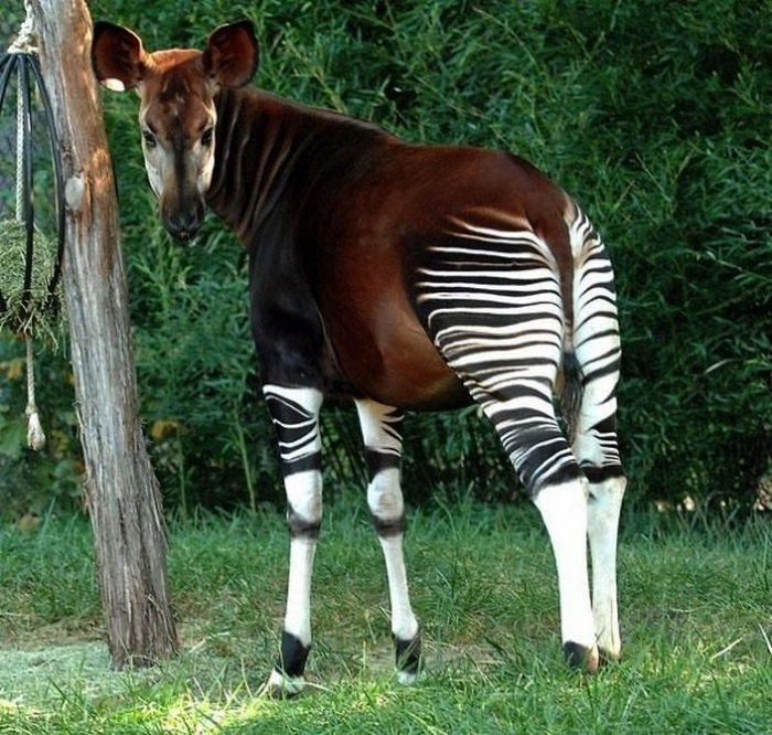 20 Unusual Animals to See Before You Die 66