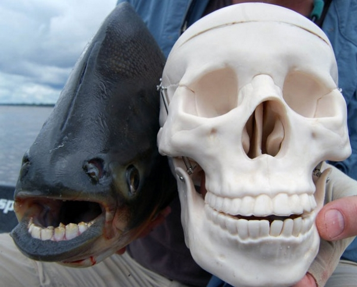 20 Unusual Animals to See Before You Die 58