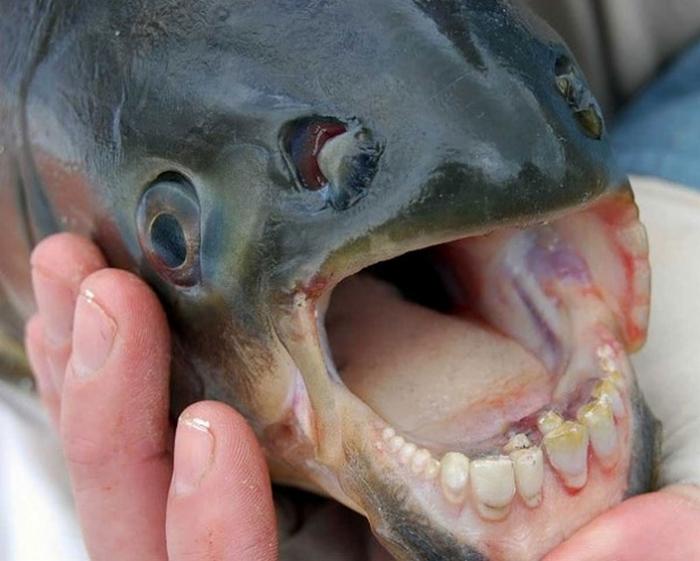20 Unusual Animals to See Before You Die 57