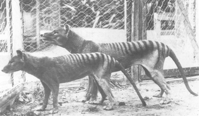 Resurrected Species of Animals and Plants 7