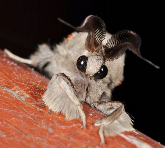 20 Unusual Animals to See Before You Die 56