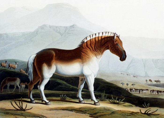 Resurrected Species of Animals and Plants 9