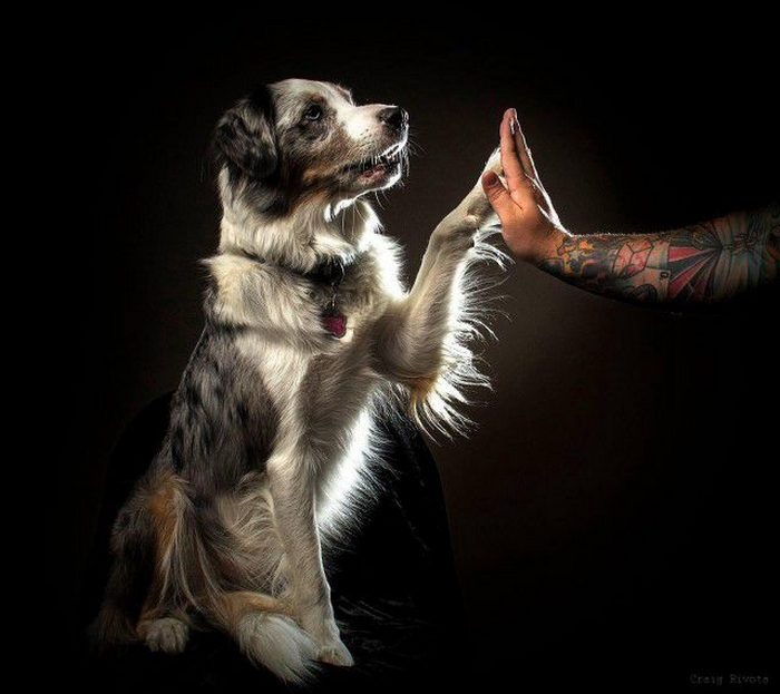 """Why Are Dogs Called """"Man's Best Friend""""? 51"""