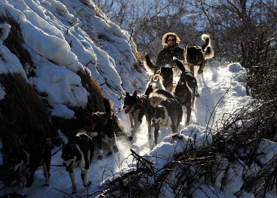Iditarod - The Last Great Race 46