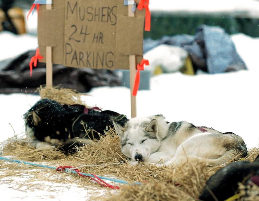 Iditarod - The Last Great Race 47