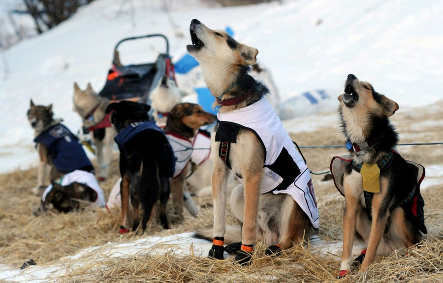 Iditarod - The Last Great Race 48