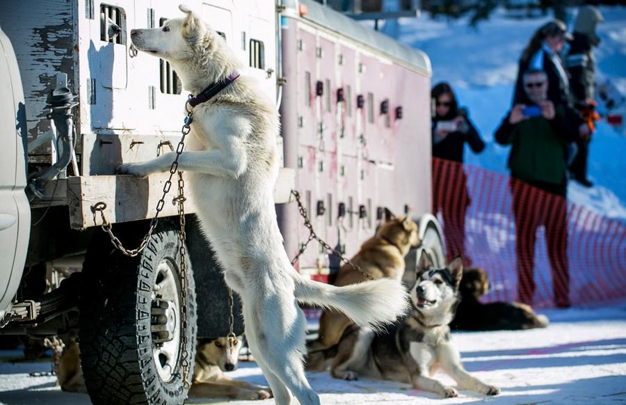 Iditarod - The Last Great Race 39