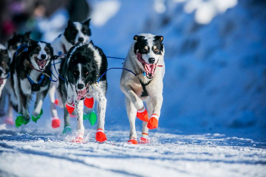 Iditarod - The Last Great Race 43