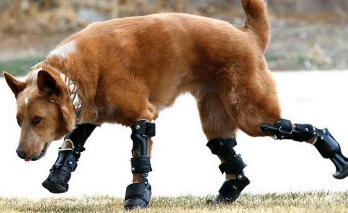 Amazing Gadgets: Prosthetic Paws and Tails for Animals 32